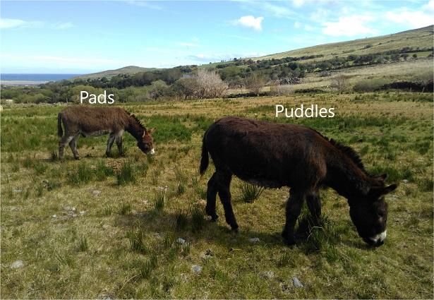 Puddles_A4_08_15%