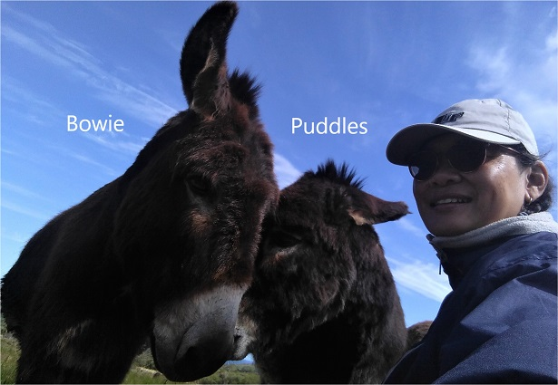 Puddles_A4_14_15%