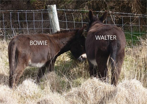 Walter_A4_ 08_15%
