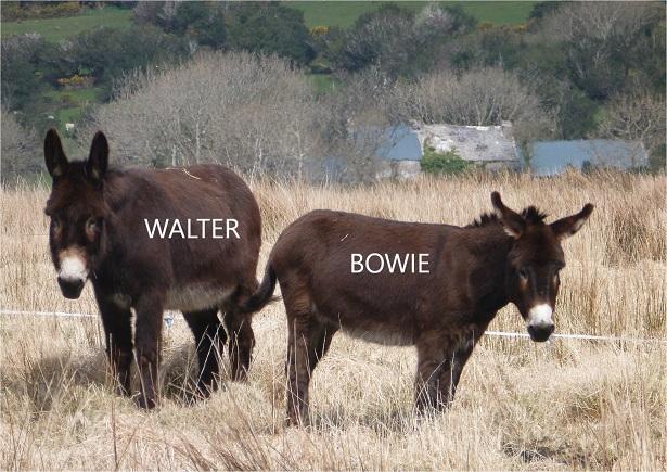Walter_A4_ 09_15%