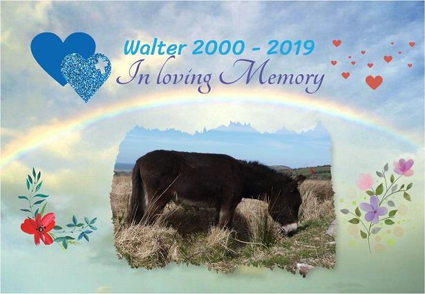 Walter_A4_ 14a_15%jpg